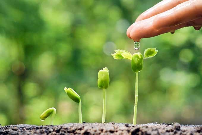 نفش مواد مغذی در رشد گیاهان