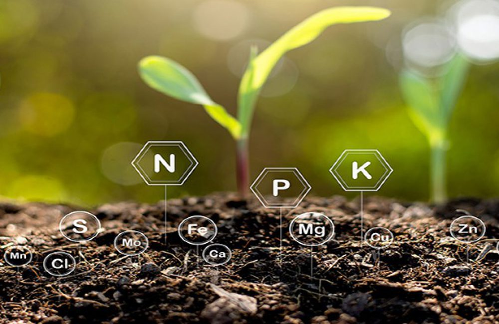 عناصر غذایی و نقش آنها در گیاه منابع غذایی