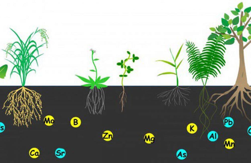 عناصر غذایی پر مصرف گیاه